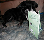 Cookie reading Flickertail & Paint, Barnyard Sleuths