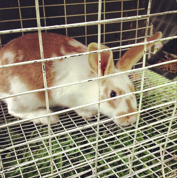 Elemental: Raising Meat Rabbits