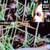 Εξωγήινο πλάσμα πυροβολήθηκε και σκοτώθηκε... Δείτε βίντεο...