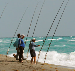 Information about coastal fishing in north carolina she for Surf fly fishing