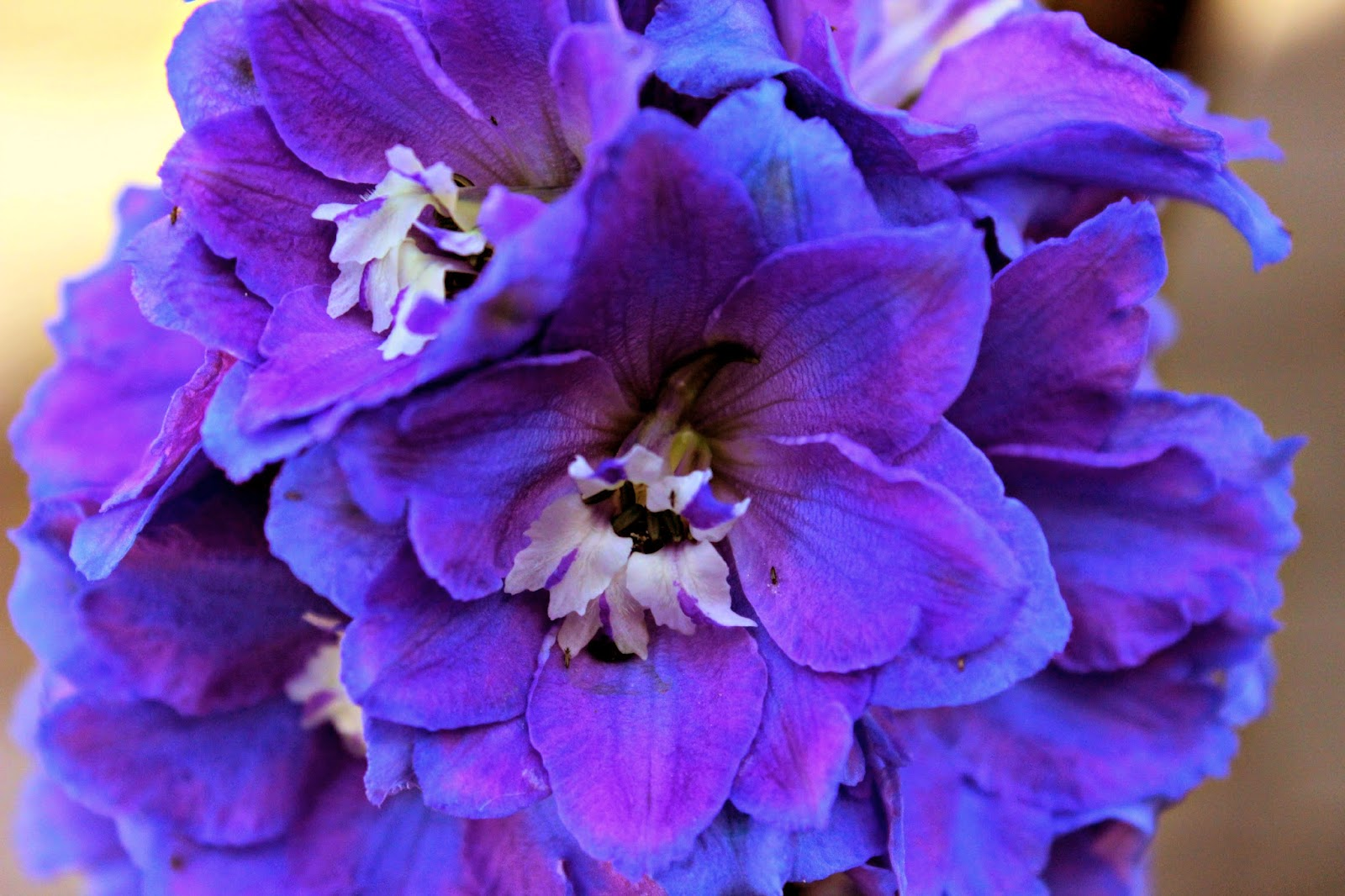 Delphiniums by MJW by Madder Hatter