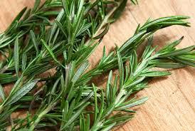 اكليل الجبل ,الروز ماري ,اليايزمر ,حشيشه العرب ,عشبه مفيده للجسم ,توابل للطعام ,http://www.sihati.com/2013/11/The-benefits-of-the-herb-rosemary.html