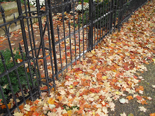 Madison fall leaves