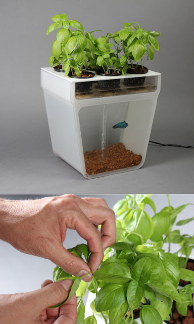 Coolest Gadgets For Your Kitchen Garden (15) 13