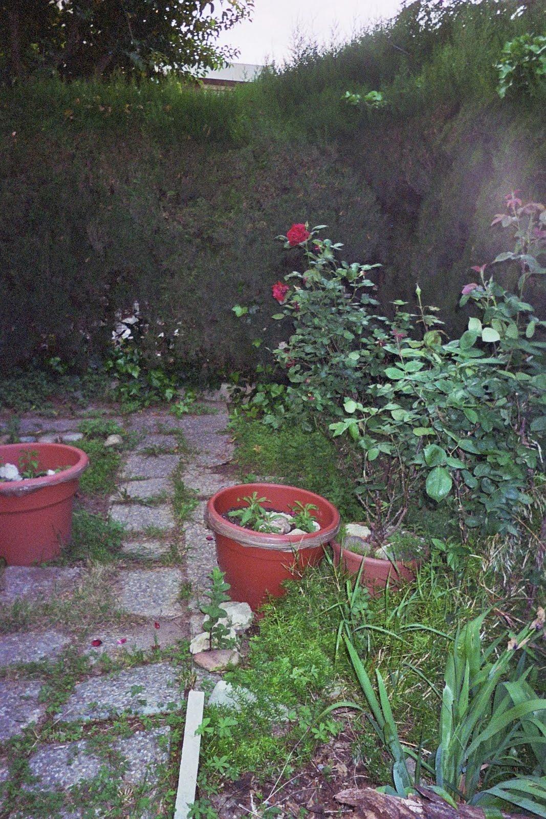 Nuestros huertos y jardines maceto huerto concepto - Huerto y jardin ...