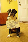 This dog shaming post made me laugh out loud: