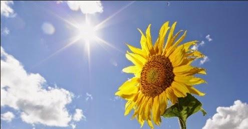 Il girasole che amava il sole