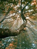 Rayos de sol filtrándose en bosque