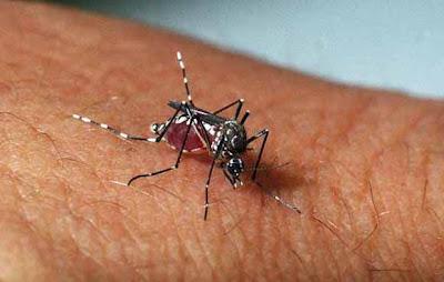 Solidão - PE registrado o primeiro caso de dengue hemorrágica do município