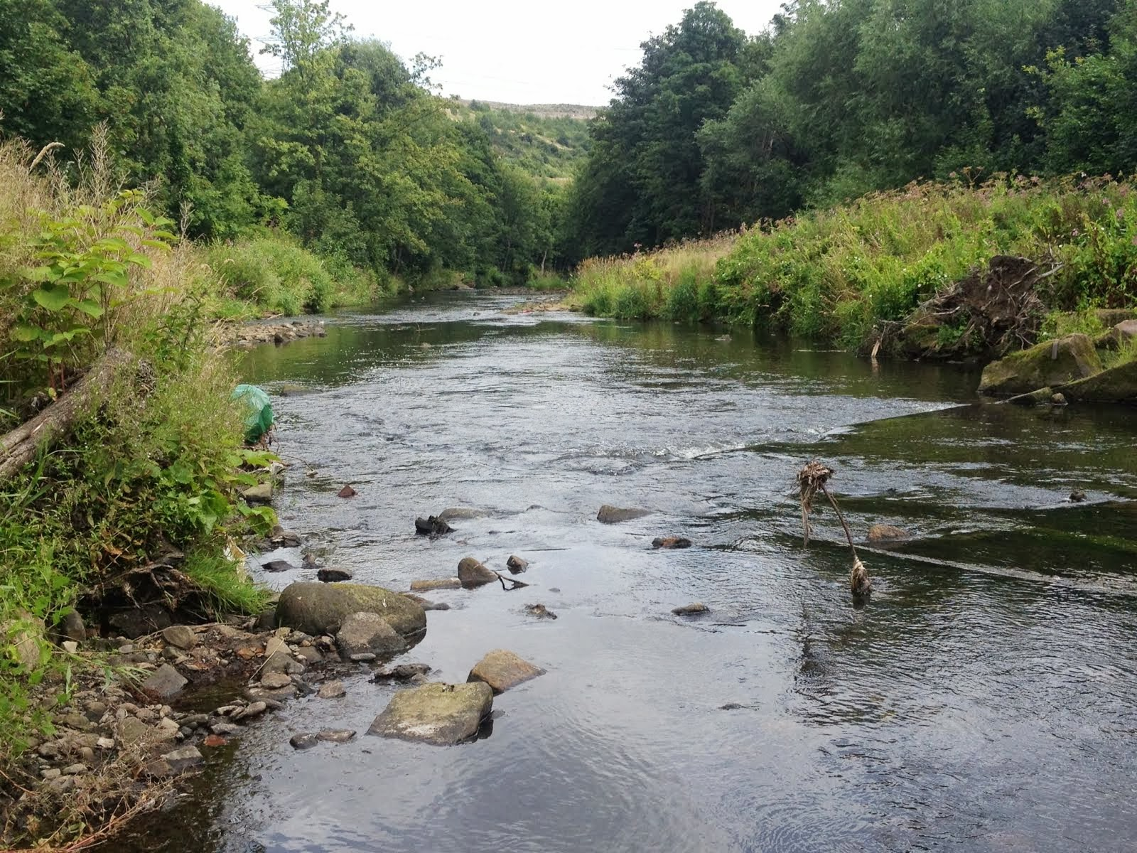 Sheffield Fly Fishing - River Don