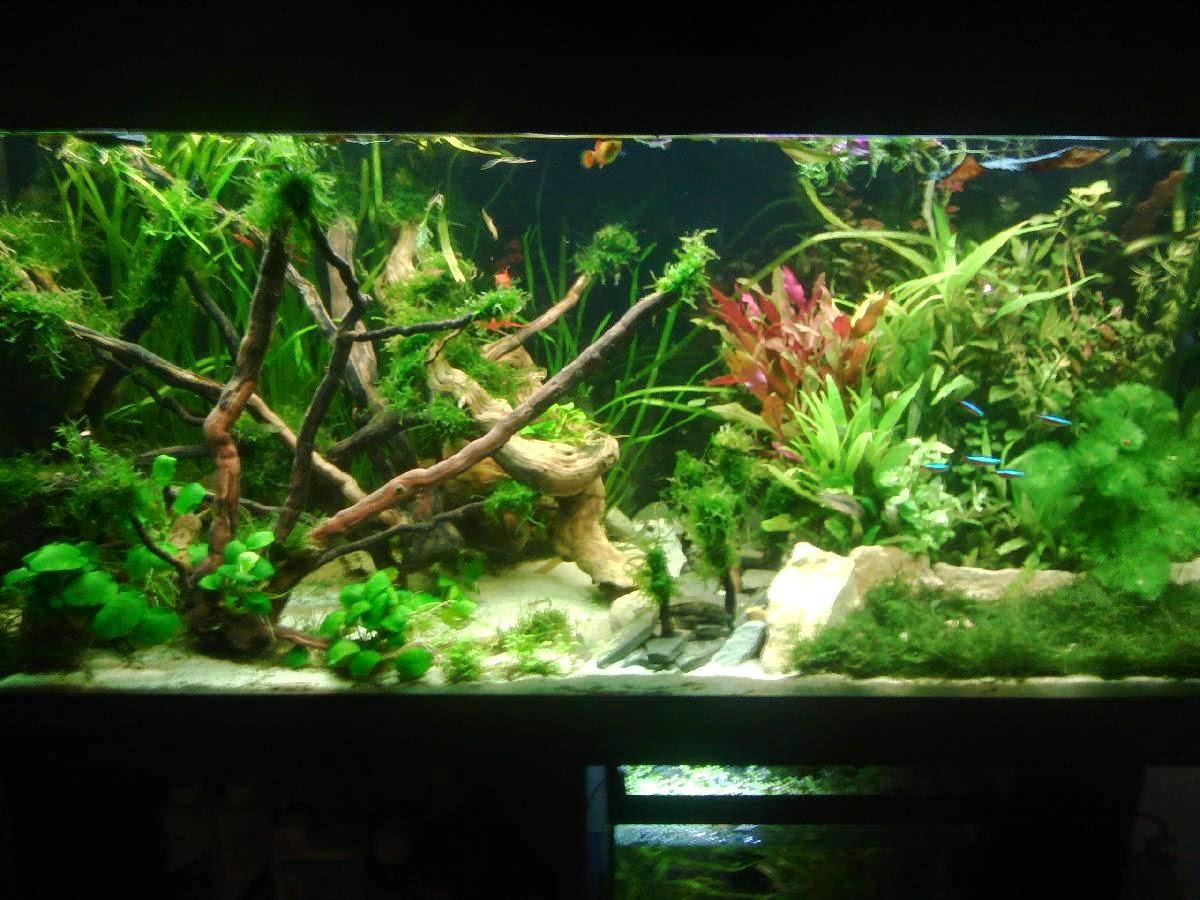 l 39 aquarium la maison les r sultats du concours photo l. Black Bedroom Furniture Sets. Home Design Ideas