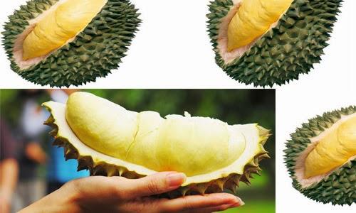 Obat Tradisional Sembelit dan Manfaat Buah Durian