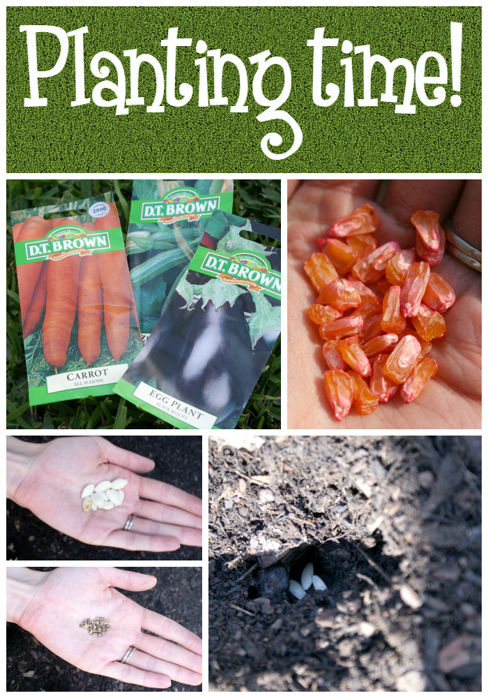 How to plant vegetable seeds - Raised Veggie Patch from The Reject Shop
