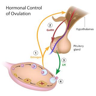 arimidex before menopause