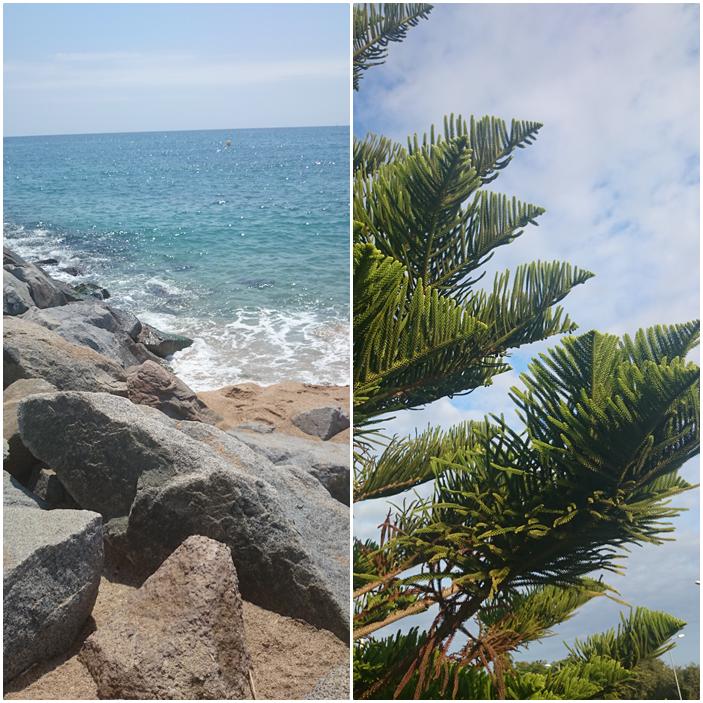 plaża w hiszpani,choinka,kamienna plaża,widok w barcelonie,co warto zobaczyć w hiszpani,morze,plaże hiszpańskie