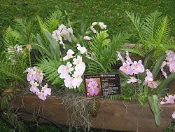 Exhibicion plantas nativas