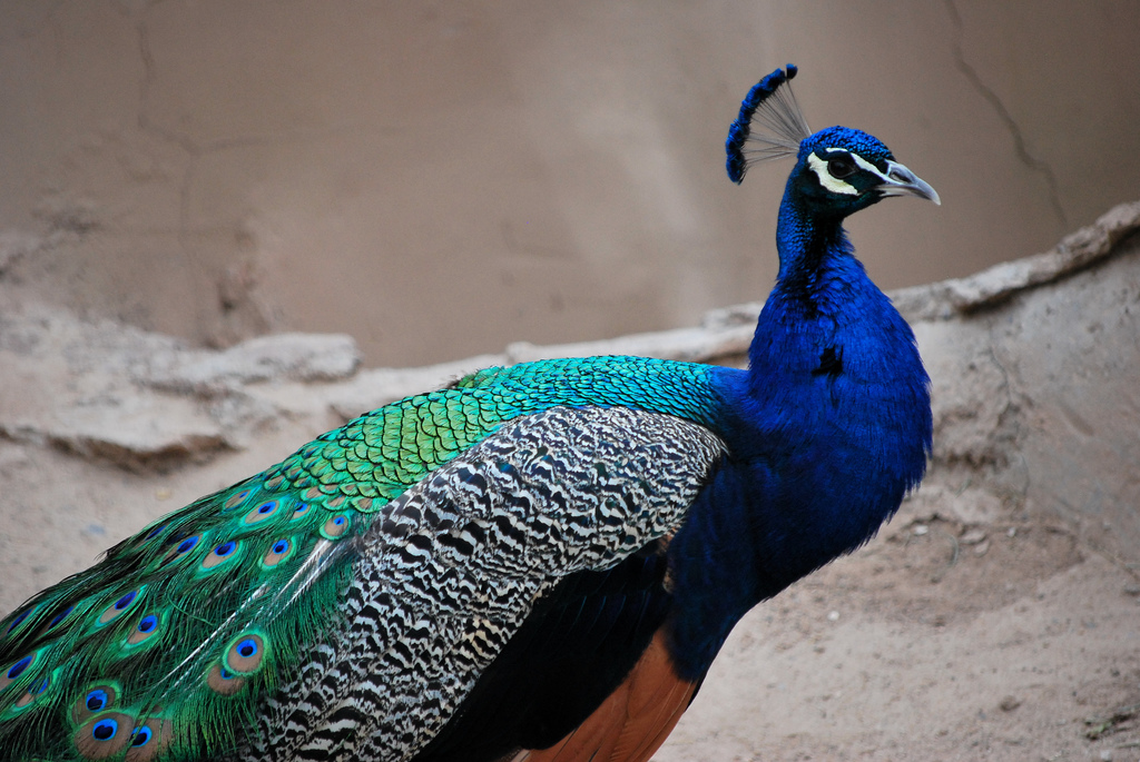 7 Most Beautiful Birds on Earth  Scribolcom