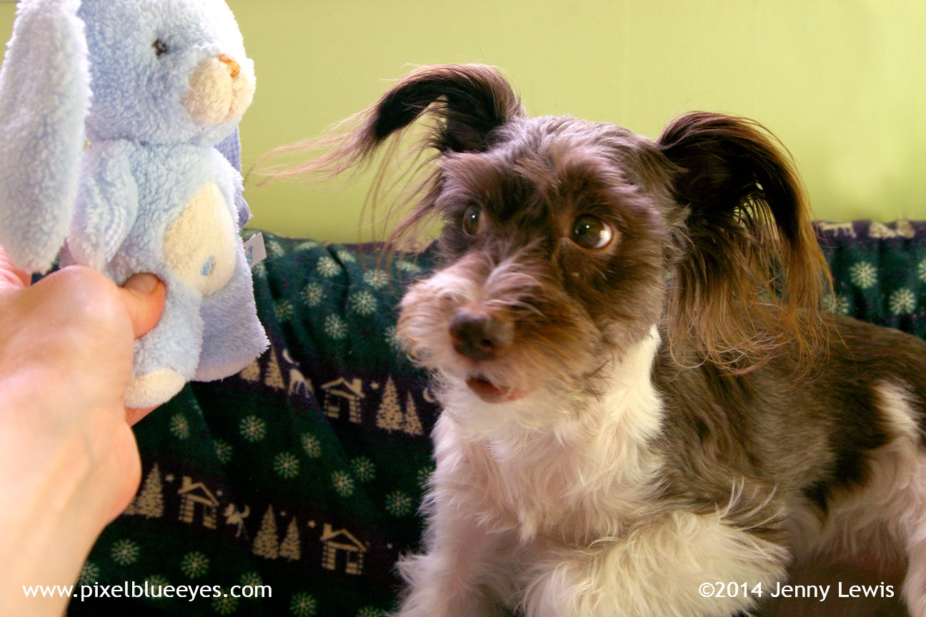 Image of Pixel looking at Blue Bunny with a side glance. Pixel can't believe what Blue Bunny just said!