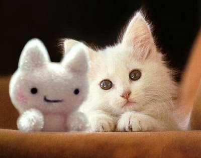 funny image gallery cute cats and kittens pictures
