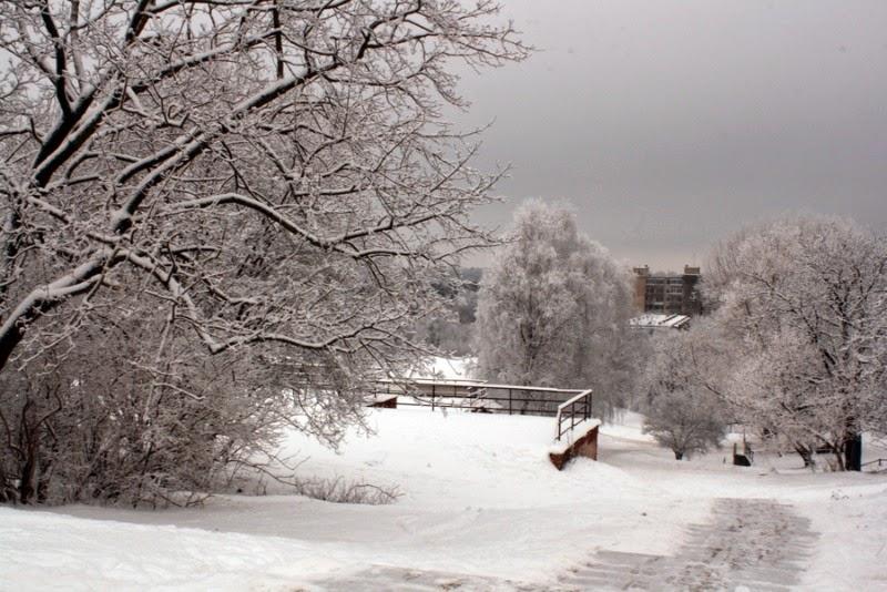beautiful day winter wonderland snowy white