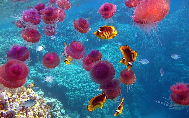 Jellyfish Wallpaper