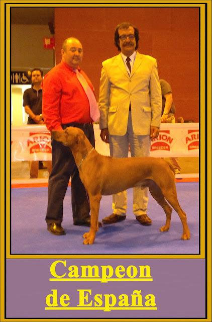 Aresvuma Ha-Shah Campeón de España Rhodesian Ridgeback