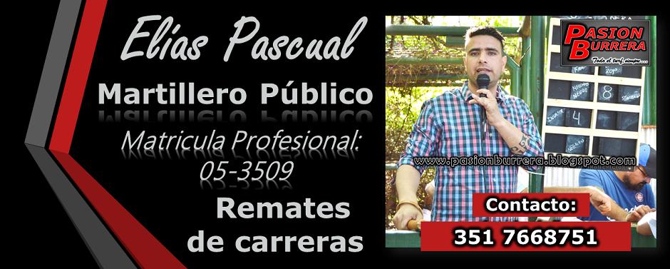 ELIAS PASCUAL - MARTILLERO