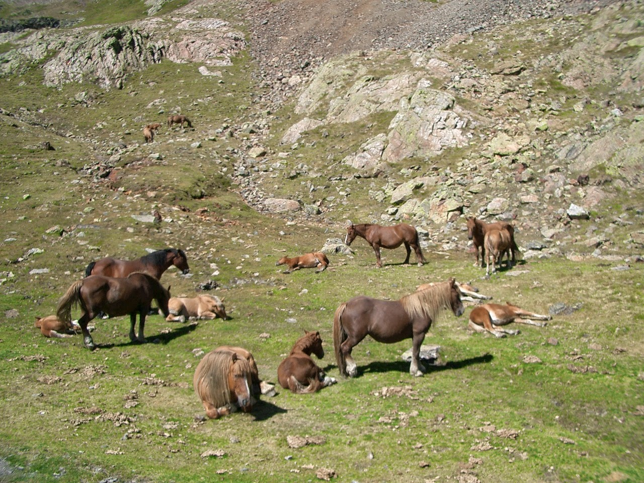 ponies grazing below the Port du Venasque