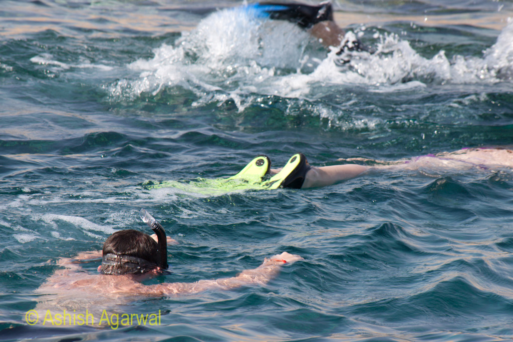 Multiple people doing snorkeling in the water near Sharm el Sheikh near the coral reefs