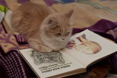 Reader Cat/ Gata Lectora