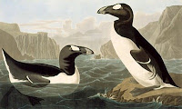 great auks birds by Audobon