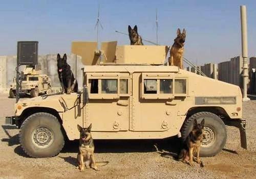 photoscope us army moderne  10168098_10152364745554769_8125785105225614909_n