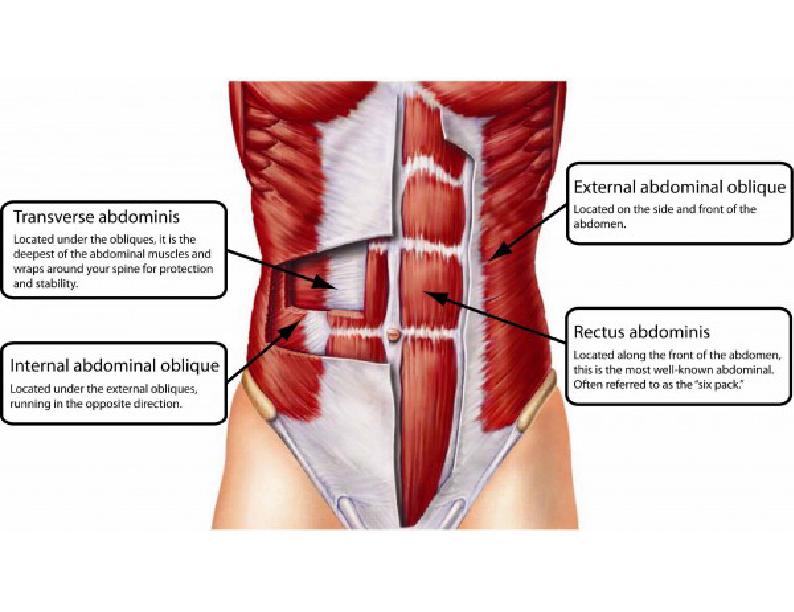 Lujoso Los Músculos Abdominales Femeninos Inspiración - Imágenes de ...