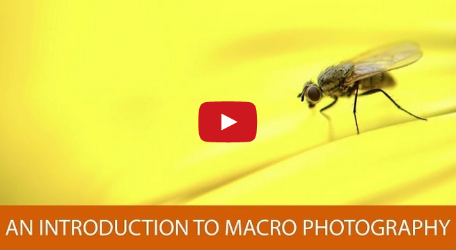 An Introduction to Macro Photography - YouTube Video
