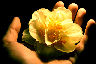 imagen manos+flor+amistad+poemas+de+amistad+poemas+dia+del+amigo+amigas+mujeres