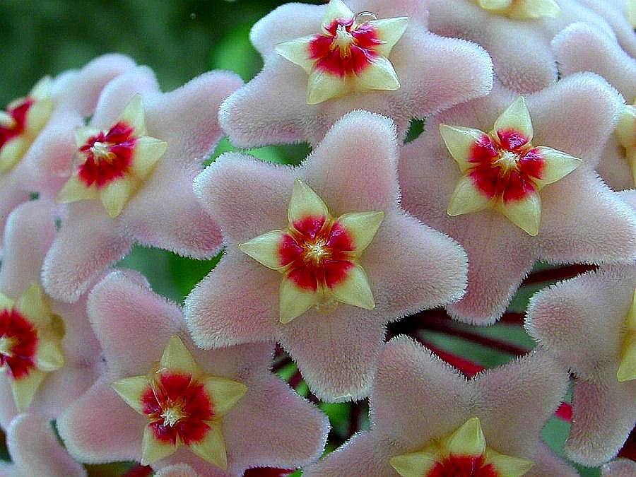 23 amazing flowers ndash - photo #31