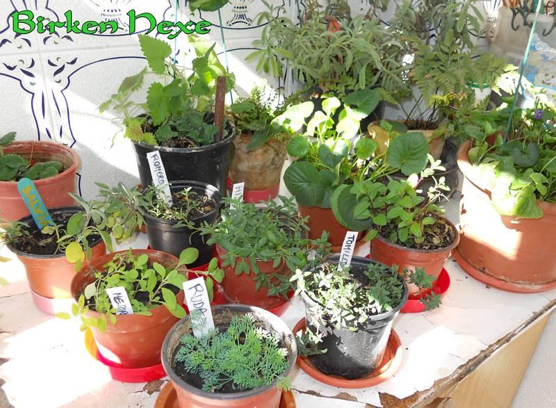 La bruja verde unas fotos de mis plantas en invierno - Plantas de invierno ...