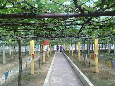 Ladang Anggur Tasik Beris