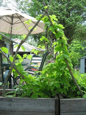 treillis plante