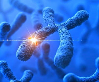 http://sparkonit.com/2014/04/30/gene-mutation-that-leads-to-abnormal-development-responsible-for-autism-discovered/