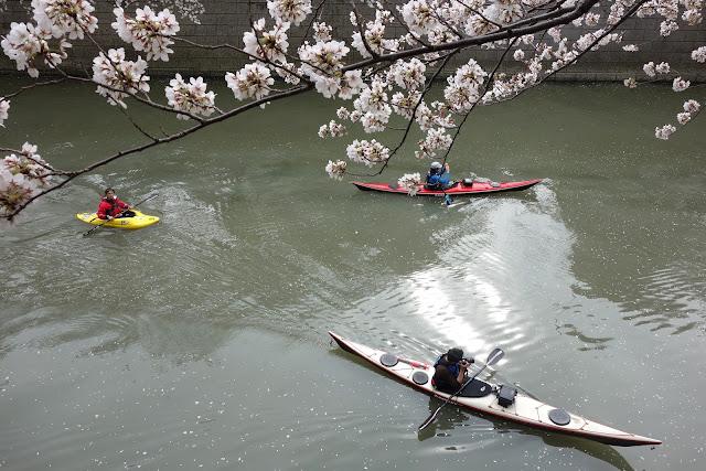 Sakura at Meguro river 2013 canoeing