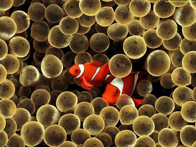 Fish Standard Resolution Wallpaper 2