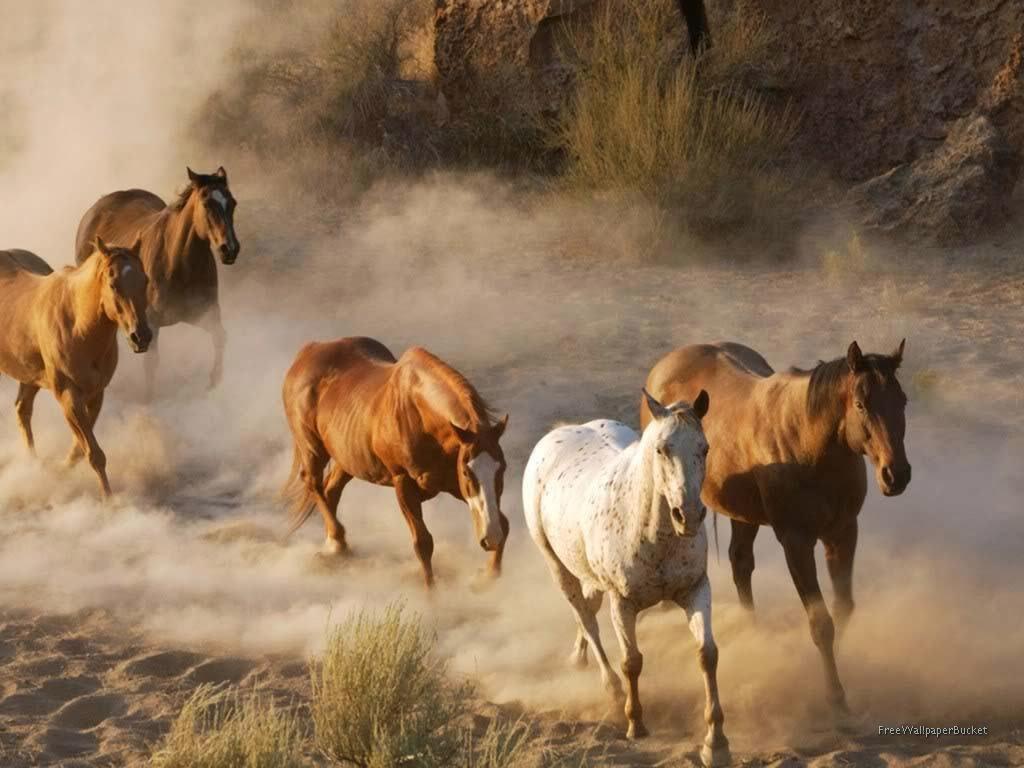 animals horse running free - photo #4