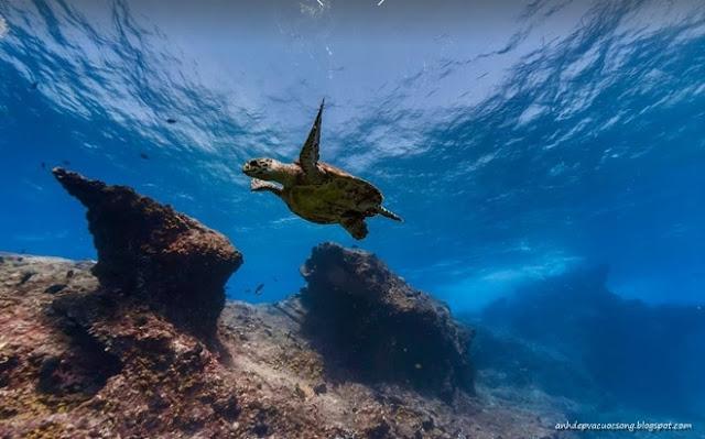 Ảnh đẹp đáy đại dương