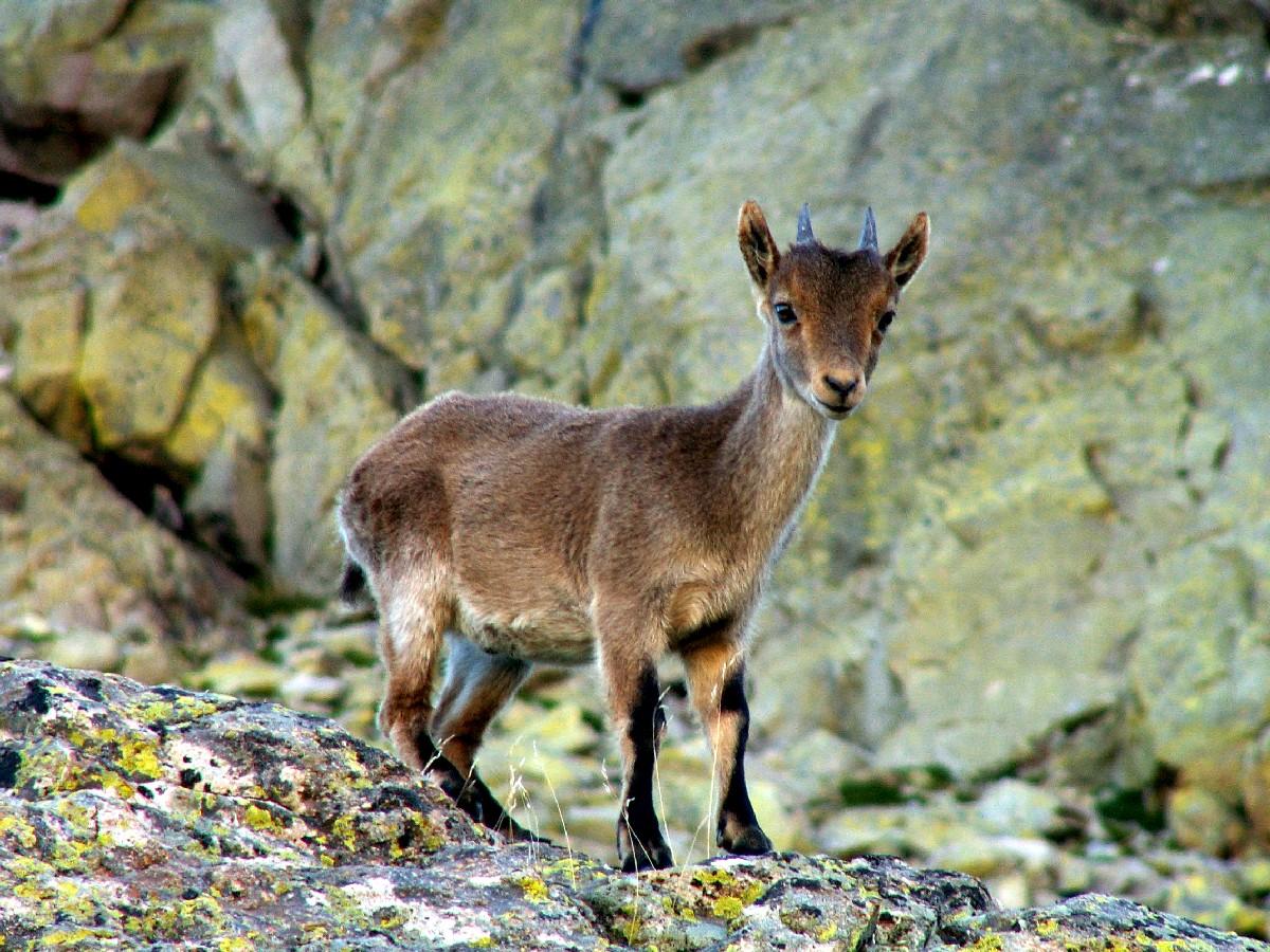 http://gdmeverest.blogspot.com.es/2011/03/segundones-de-lujo-galana-y-morezon.html