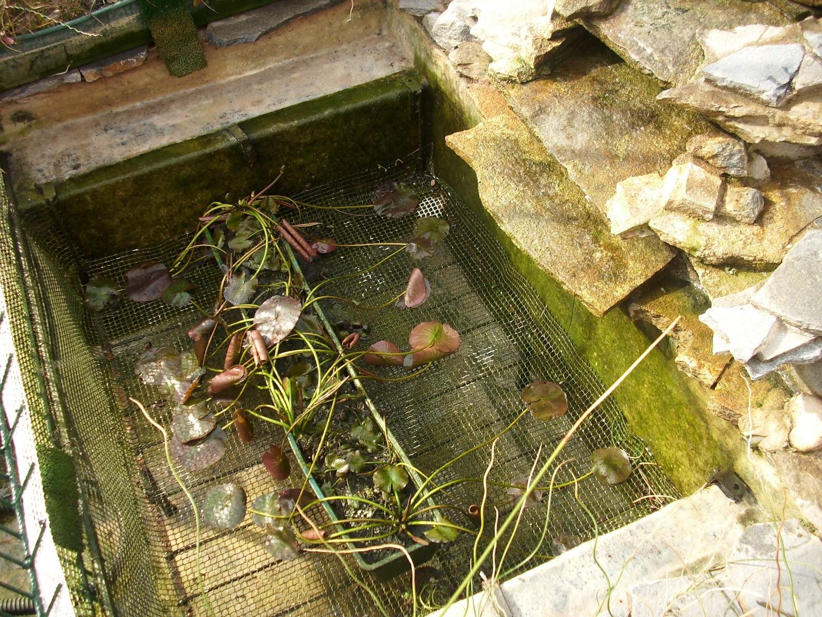 Mis tortugas acu ticas dos ambientes diferentes for Estanques plasticos para peces