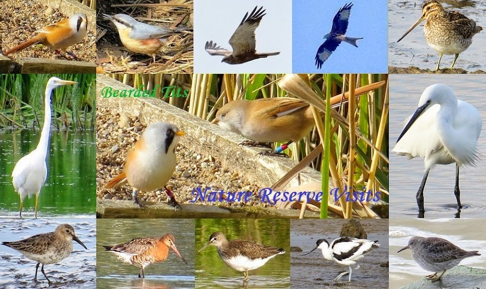 Nature Reserve Birds