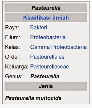 PENYAKIT PASTEURELLOSIS PADA TERNAK KELINCI