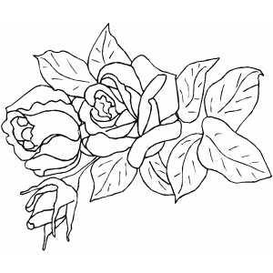 dicas de Desenhos de Rosas