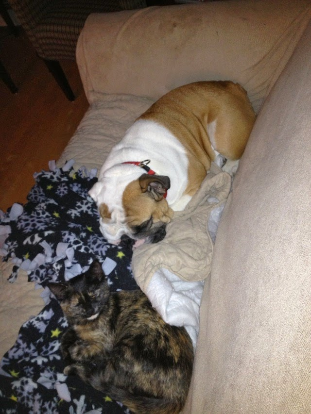 kitty and english bulldog sleeping
